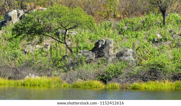 a beautiful landscape of water stones and tree