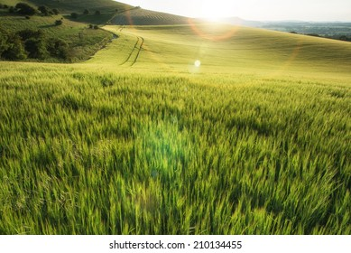 Beautiful landscape wheat field in Summer sunlight evening with added lens flare filter