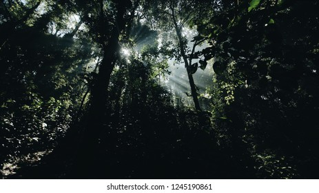 Beautiful landscape of wild African nature, forest in sunny bright day.