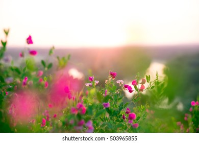 Beautiful landscape with the wilderness of herbs and pink wildflowers. The idea of the background of Mother's day, 8 March and World environment day. Soft focus