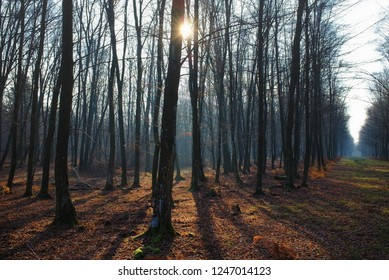 Beautiful landscape of winter bare trees with sunbeam and long shadows