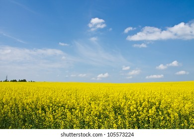 Beautiful landscape with yellow fields with flowers and blue sky