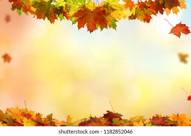 Beautiful  landscape with yellow trees,green grass and sun. Colorful foliage in the park. Falling  leaves natural background .