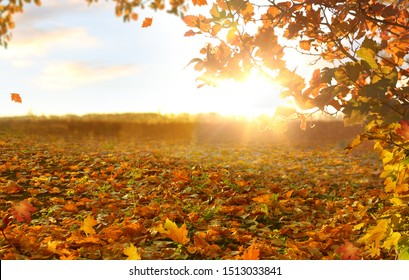 Beautiful  landscape with yellow trees,green grass and sun. Colorful foliage in the park. Falling leaves natural background.