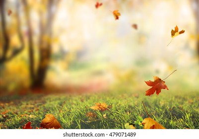 Forest Blurred Background Images, Stock Photos & Vectors