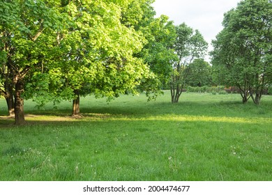 Beautiful landscaped park with space for text. Green environment in a landscaped city park. Copy space for text