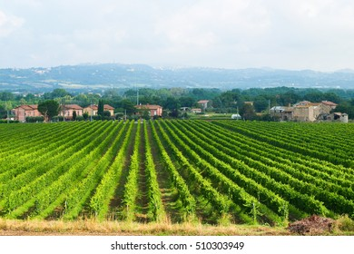 Beautiful landscapes around matelica, the city of Marche where make Verdicchio wine