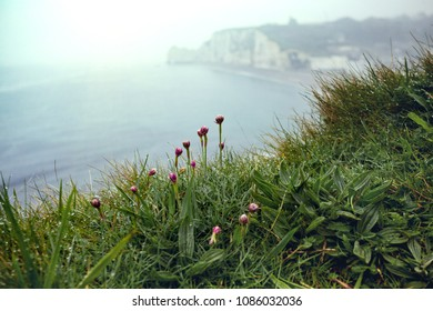 beautiful landscapes on the cliff of  Etretat on a cloudy day and flowers in the foreground. France