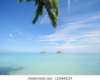 Beautiful Lanikai beach Kailua palm tree with two island the mokes in a perfect clear blue turquoise tropical perfect water