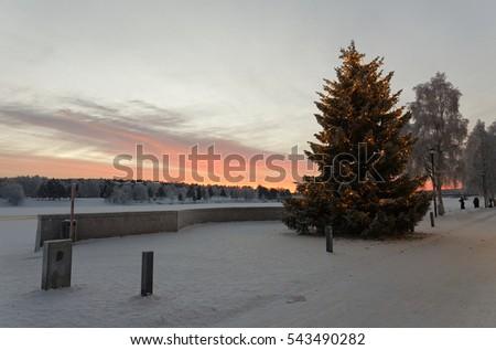 Beautiful lapland sunrise christmas tree front stock photo edit