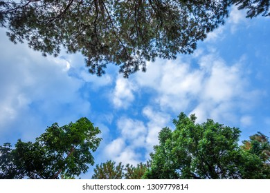 Beautiful larch forest summer with different trees,pine forest green on the mountain on nature trail with blue sky with white cloud.