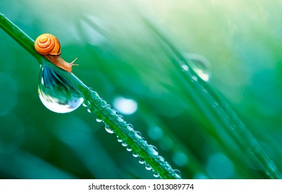 Beautiful large drop of water and lovely little snail in the grass in the morning, macro. Grass in  morning dew in the spring summer on a green background in nature with copy space