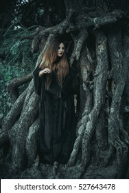 Beautiful large Halloween witch, wearing a vintage Gothic dress with long sleeves and sweeping train.Is in roots of terrible tree.Mystical.Fantastic shooting in wild.Fashionable toning.Creative color.