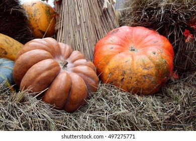 Beautiful and large pumpkins lying in a heap at the manger.