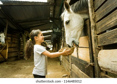 Beautiful latin girl feeding a white hore in a stable