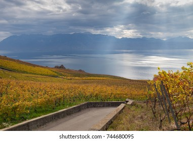 Beautiful Lavaux region with the vineyards on autumn and fantastic view on lake Leman on the background. Canton Vaud, Switzerland