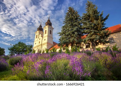 Beautiful lavender blooms in Tihany. Blooming lavender field in front of The Benedictine Abbey of Tihany on a sunny early summer day. Historical  monastery of Tihany in Hungary's Balaton region.