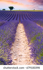 Beautiful lavender fields in a summer day in Valensole, France