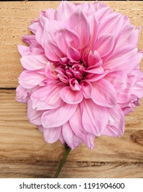 Beautiful 'Lavender Perfection' Dahlia flower on wooden background