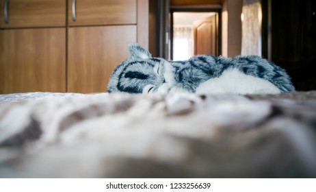 Beautiful Lazy Gray Striped purebred cat slipping  by the window, sunny day in bedroom on sofa. Mix Shorthair kitten Relaxing and laying on brown Blanket. Copy space for design