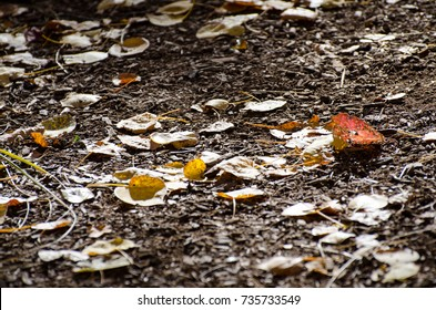 Beautiful Leaf Covered Forest Trail Closeup