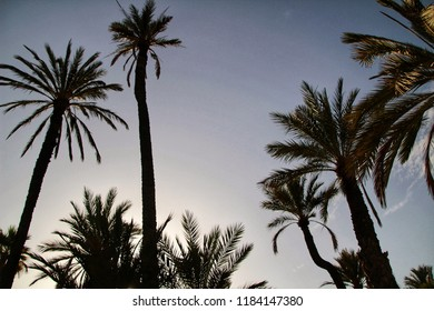 Beautiful and leafy municipal park in Elche between palm trees. Elche, Alicante, Spain.