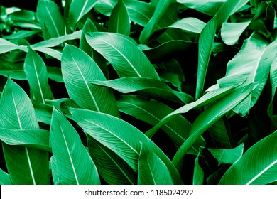 Beautiful leaves background.