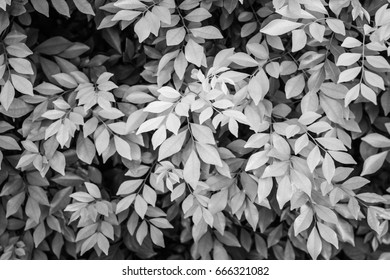 Beautiful leaves background black and white