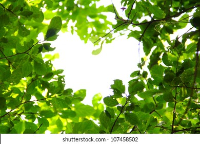 Beautiful leaves background love nature concept