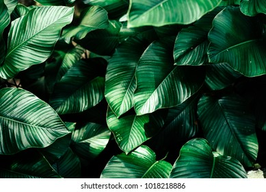 beautiful leaves background for wallpaper and backdrop