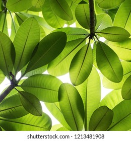 Beautiful leaves in the nature, green background