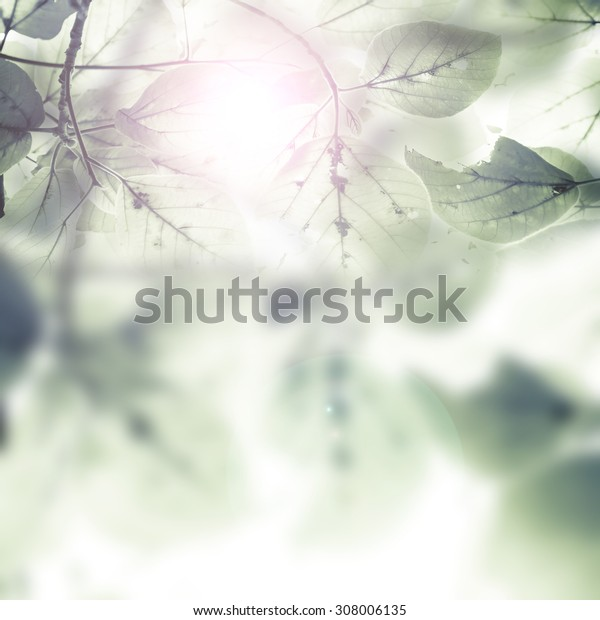 Beautiful  leaves over blurred  background, sun light, spring season, abstract natural border