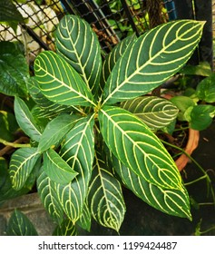 Beautiful leaves pattern in the garden