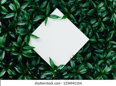 Beautiful leaves with white copy space background in garden.nature concepts design.For presentation or key visual ideas