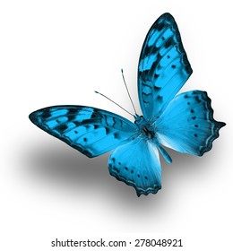 Beautiful Light Blue butterfly upper wing profile flying up