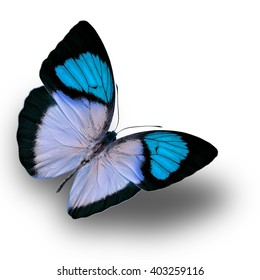 Beautiful Light Blue butterfly upper wing profile isolated on white background