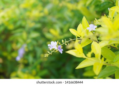 Beautiful light blue purple flower on green natural background with filtered color.