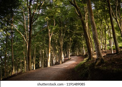 Beautiful light coming through a woodland with a walkers path up Kinnoull Hill, Perth, Perthshire, Scotland