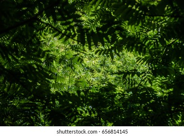 Beautiful light filters through a monochromatic green canopy of tree leaves