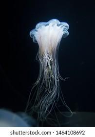 Beautiful light jellyfish in the water