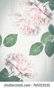 Beautiful, light pink roses in full bloom, close up on light grey, artistic background, instagram style.