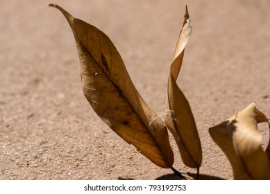 The beautiful light and shadow of leaves on the ground.