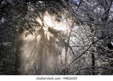 Beautiful light streaks in falling snow through trees