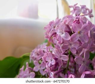 Beautiful lilac blossom decorates interior