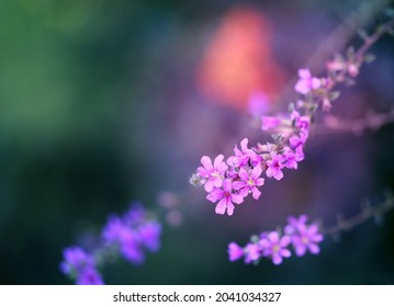 Beautiful lilac flowers in the autumn forest backgroun