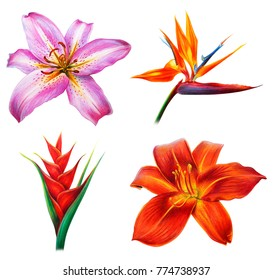 Beautiful lilies and tropical flowers drawing