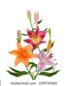 Beautiful lily flower bouquet isolated on white background