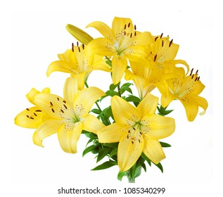beautiful lily flower isolated on white background