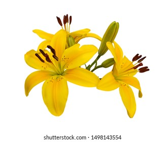 Beautiful Lily flowers isolate on white