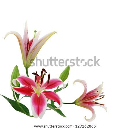 Beautiful lily flowers isolate on white stock photo edit now beautiful lily flowers isolate on white izmirmasajfo